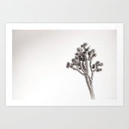 Joshua Tree in Black & White Art Print