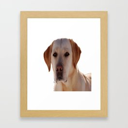 Portrait of A Golden Labrador Dog Framed Art Print