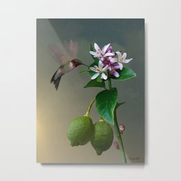 Lemon Tree and Hummingbird Metal Print