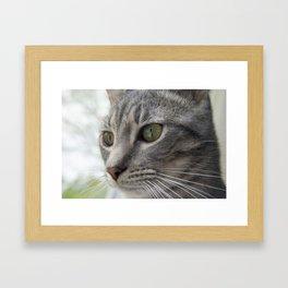 Contemplative Kitten Framed Art Print