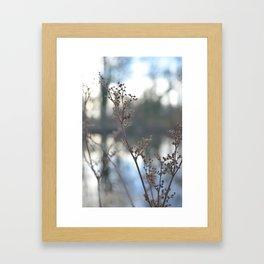 Winter Cow Parsley, Fine Art Photographic Print. Home Decor Framed Art Print