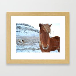 Stand Out - Icelandic Horse Framed Art Print