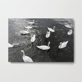 Swans in Prague Metal Print