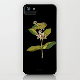Asclepias Gigantea Mary Delany Delicate Paper Flower Collage Black Background Floral Botanical iPhone Case