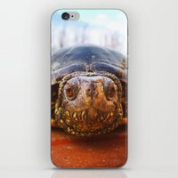 turtle iPhone & iPod Skins featuring Turtle by Anna Milousheva