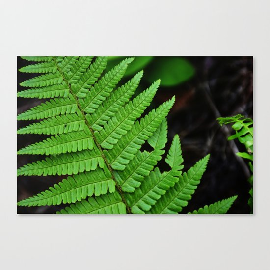 Bright Green Fern in the Forest Canvas Print