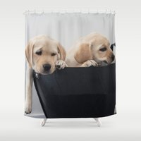 labrador Shower Curtains featuring Labrador Puppy by Diandra