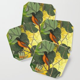 Baltimore Oriole on Tulip Tree, Vintage Natural History and Botanical Coaster