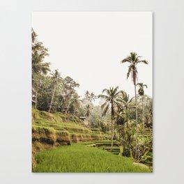 Tegalalang Rice Terrace  Ubud Bali 2 / Travel photography art print -  Palm Tree rice field Canvas Print