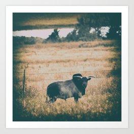 Miniature Zebu Bull Art Print