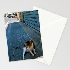 Israeli Alley Cat  Stationery Cards