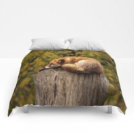 FOX SLEEP Comforters