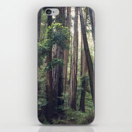 The Redwoods at Muir Woods iPhone Skin