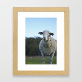 Lucy @ Happy Hooves Farm Sanctuary Australia Framed Art Print