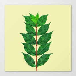Tree Branch Minimal Leaves Canvas Print