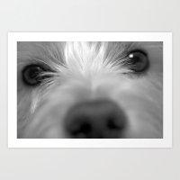 westie Art Prints featuring Westie by Bwoodstockfoto