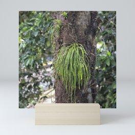 Epiphyte growth on tree in rainforest Mini Art Print