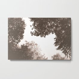 Whites beyond forest Metal Print