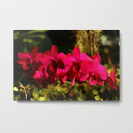 Lovely As An Orchid Metal Print