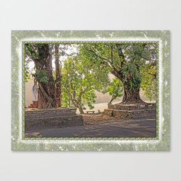 Tropical Hardwood Trees in Pokhara, Phewa Lake, Nepal Canvas Print