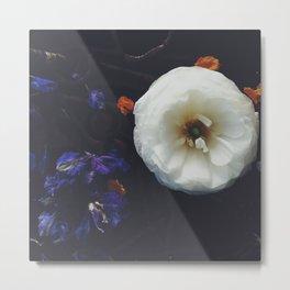Fade Out, Ranunculus  Metal Print