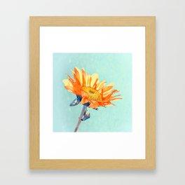 Sunflower Daze Framed Art Print