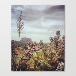 Cacti High Canvas Print