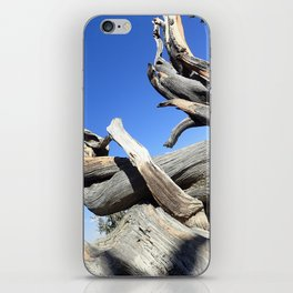 Trees and sky iPhone Skin