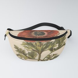 1800s Encyclopedia Lithograph of Anemone Flower Fanny Pack