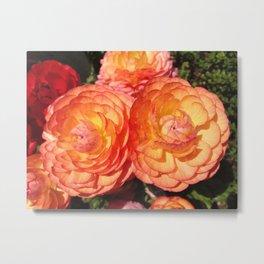 Peachy Full Blooming Roses Metal Print