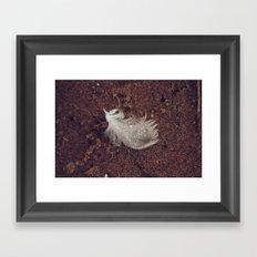 Beach Feathers 2 Framed Art Print