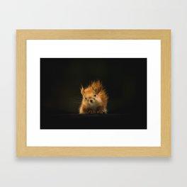squirrel in the dark Framed Art Print