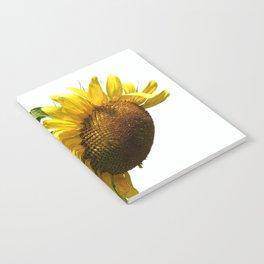 isolated sunflower on white background Notebook