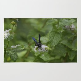 Scolia dubia a.k.a The Blue Winged Wasp Rug