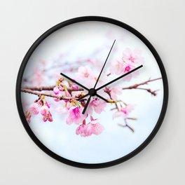 Japanese cherry-blossom tree, 'Oh-kanzakura' Wall Clock