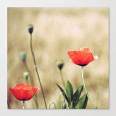 Vintage Summer - Poppy Canvas Print