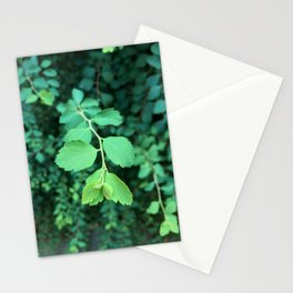 Green Blue Plant Stationery Cards