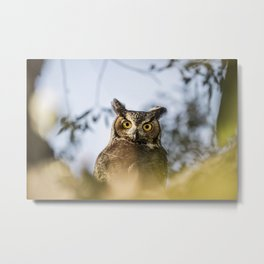 Okanagan Owl Metal Print