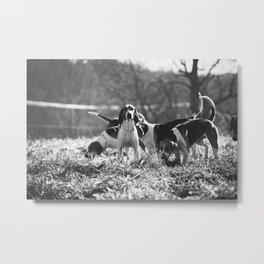 Foxhound Metal Print