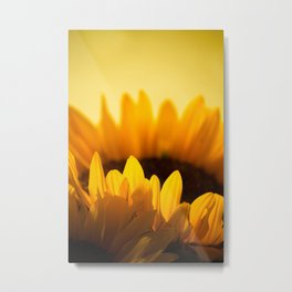 Sunflower Rise Metal Print