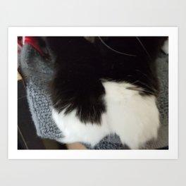 Kitten paws Art Print