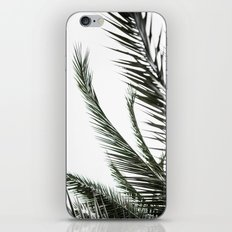 Palm Leaves 2 iPhone & iPod Skin