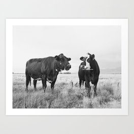 Cattle Photograph in Black and White Art Print