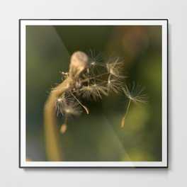 To catch a breeze Metal Print