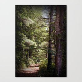 The Up North Path Canvas Print