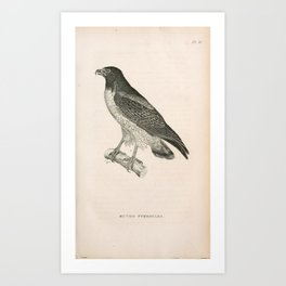 039 buteo pterocles1 Art Print