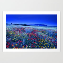 Spring poppies at blue hour Art Print