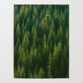 The Green Forest (Color) Poster