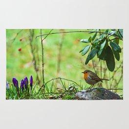 Robin in the spring Rug