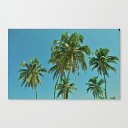 Many Palm Trees Canvas Print